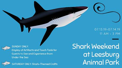 Shark Weekend