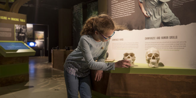 "A young girl explores the ""Becoming Jane"" exhibit at the National Geographic Museum"