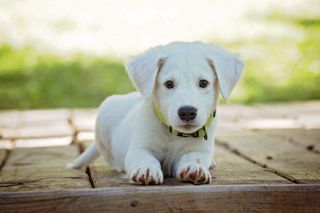 Make quarantine life more fun during coronavirus by bringing home a new puppy