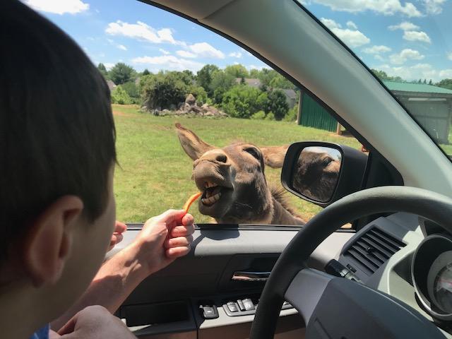 The Self-Drive Safari tour at Roer's Zoofari in Vienna, VA