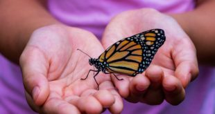 Family Events Around DC this weekend include a day with monarch butterflies