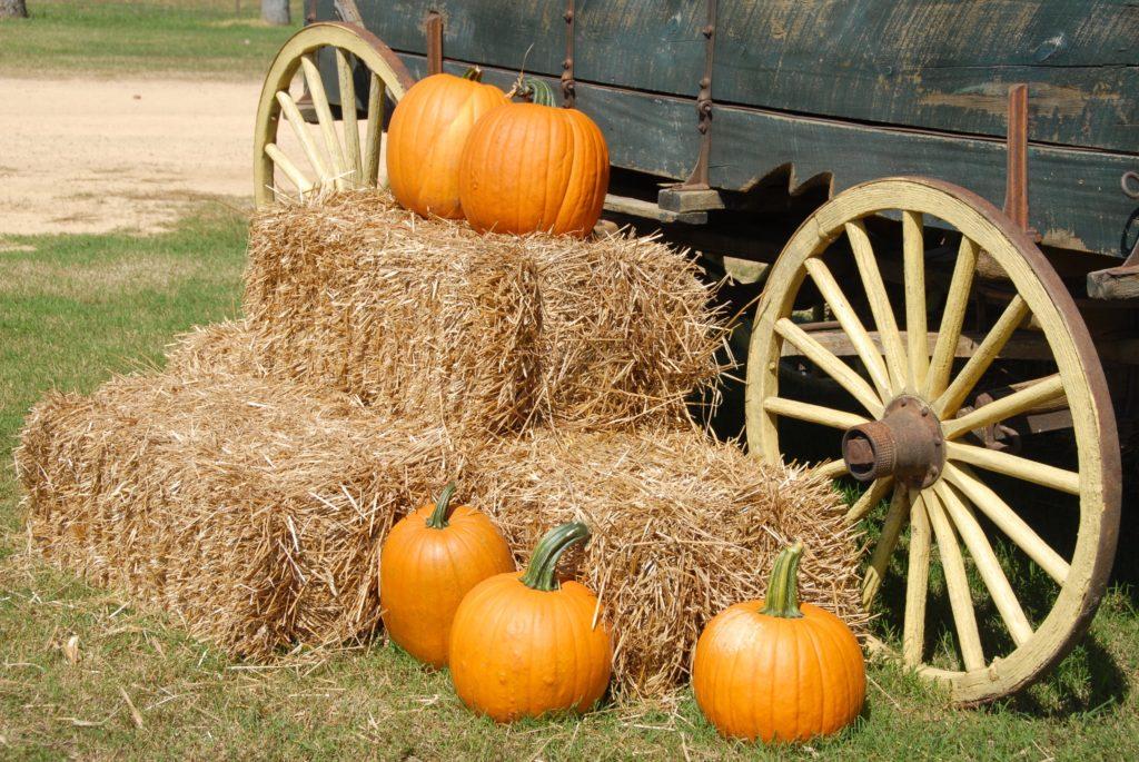 Fall festivals happening around DC