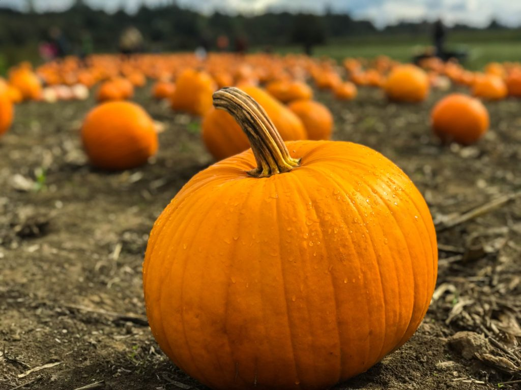 Fall Festivals in the DMV