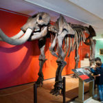 """Discover Maryland"" Exhibition & Free Museum Admission for Students"