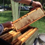 Meet the Beekeepers