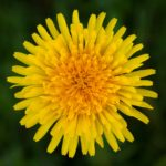 Summer Wild Edible Plants: Earth Connection Series