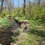 Stroll Along the Stream: Riparian Buffer Exploration