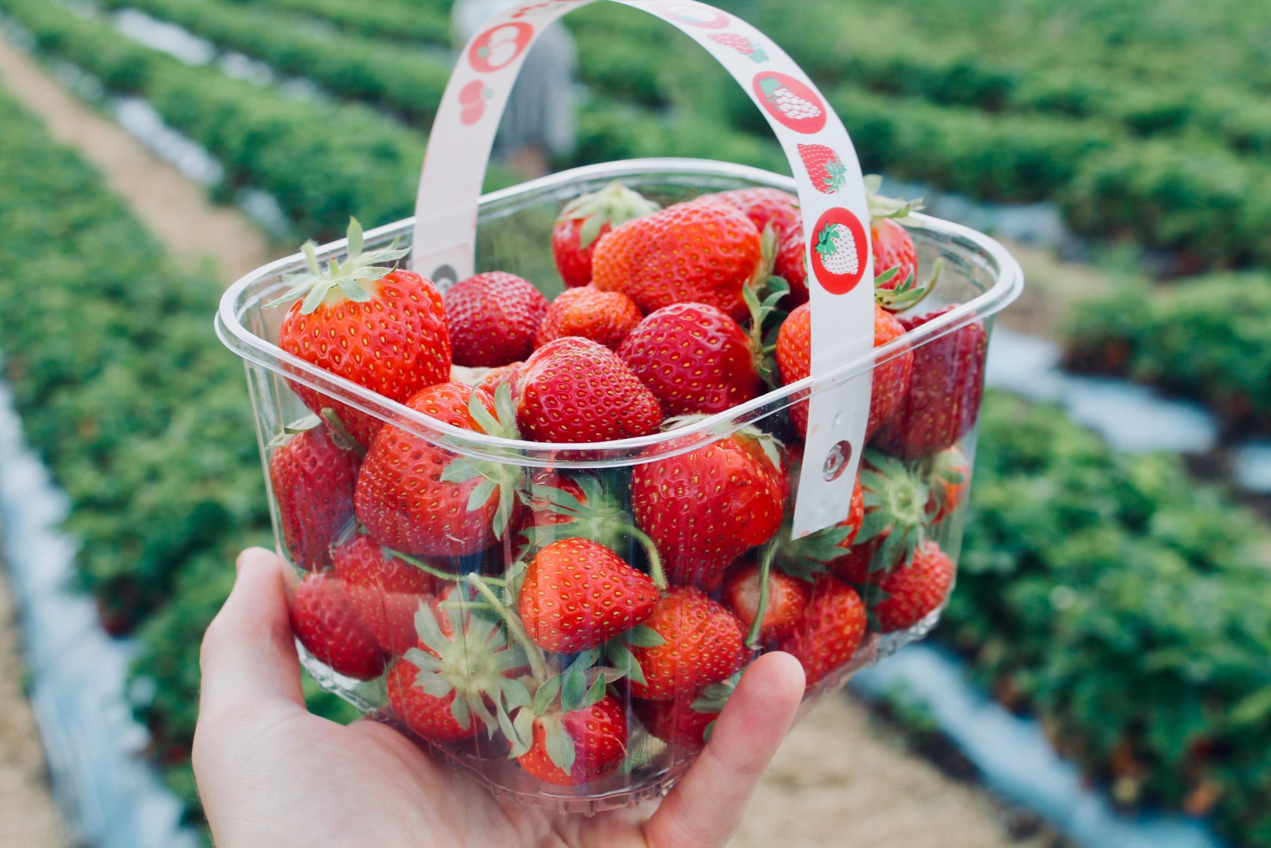 Where to Pick Your Own Berries in the DMV Area This Summer