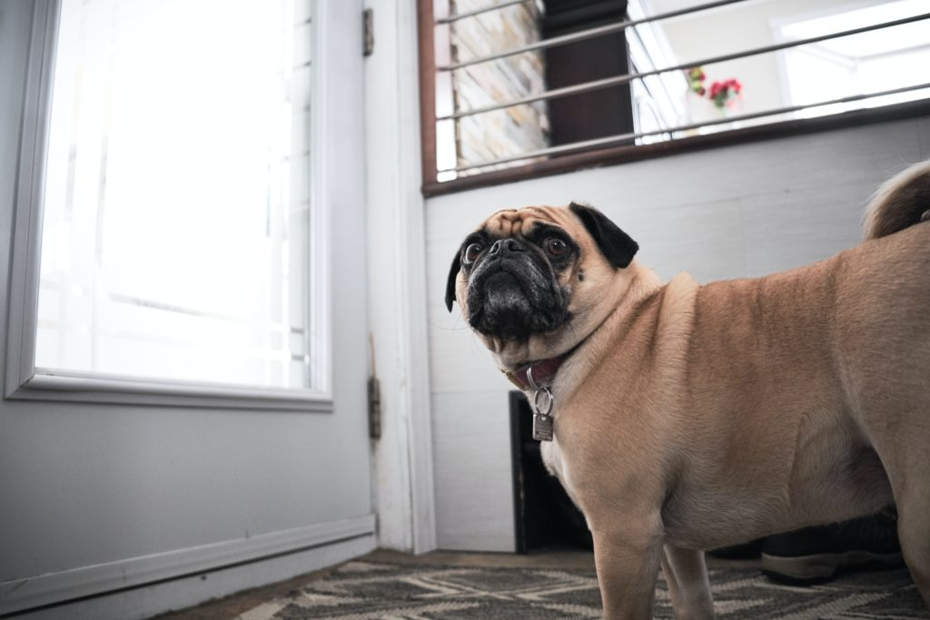 pet separation anxiety in dogs