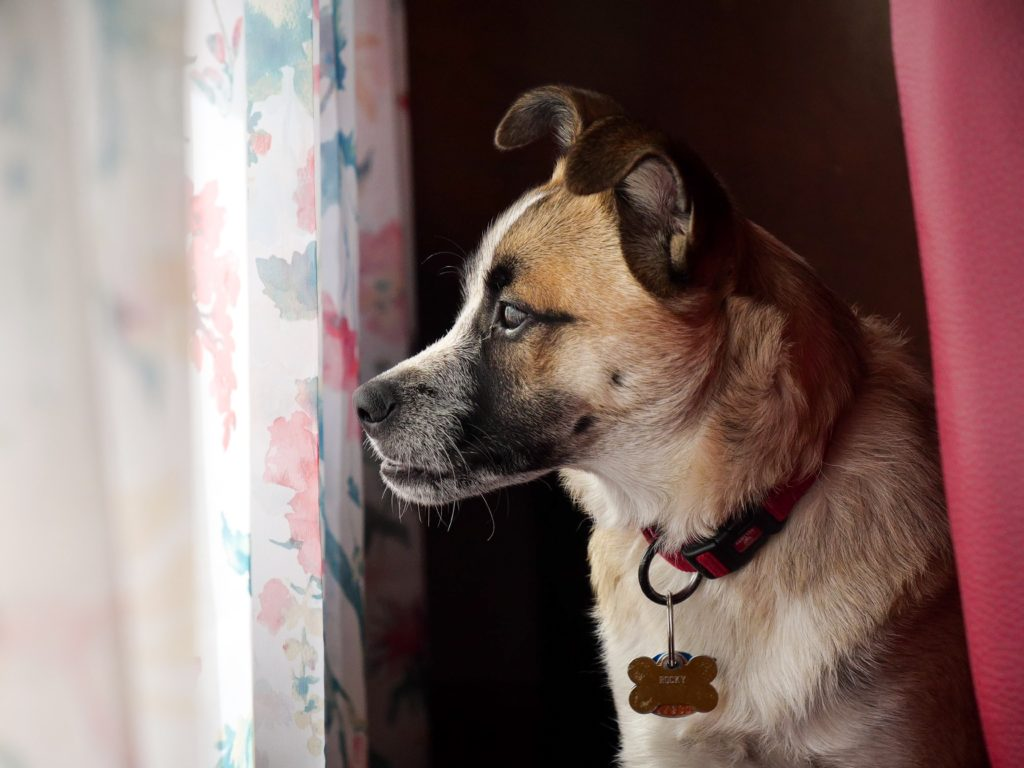 dealing with your dog's separation anxiety